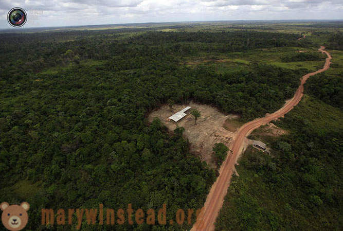 La destruction de la forêt amazonienne